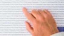 Seven New DNA Regions Linked to Kidney Cancer Risk