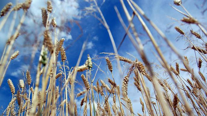 Researchers Develop First Accurate Model That Reflects Gluten's Effect