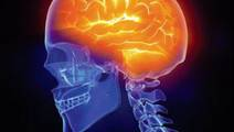 Treating Brain Inflammation Starts From the Gut