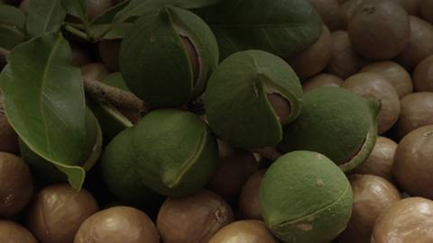 Macadamia Nuts Aid Patients with Metabolic Syndrome