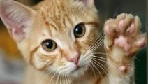 Kitten lovers beware: CDC warns of cat-scratch disease risk