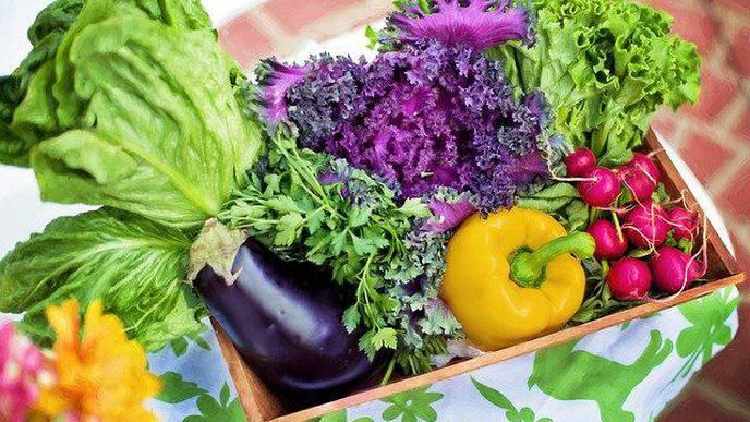 Gardening Helps Kidney Patients in Colombian Hospital