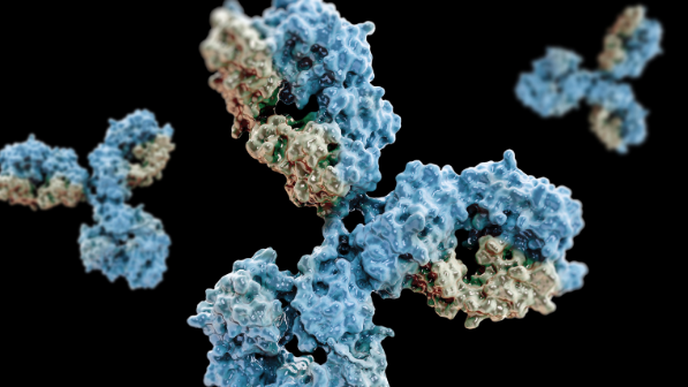 Immune System Can Be Coaxed into Selecting Key Antibodies to Fight HIV