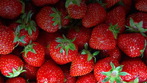 Can Strawberries Stave Off Alzheimer's Disease?