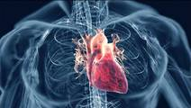 Artificial Intelligence Predicts when Heart will Fail