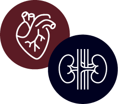 Heart and Kidney Icons